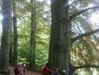 Stromy vyprávějí 3