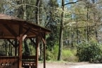 Rozkvetlé stromy v zámeckém parku obr.5