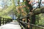 Rozkvetlé stromy v zámeckém parku obr.6