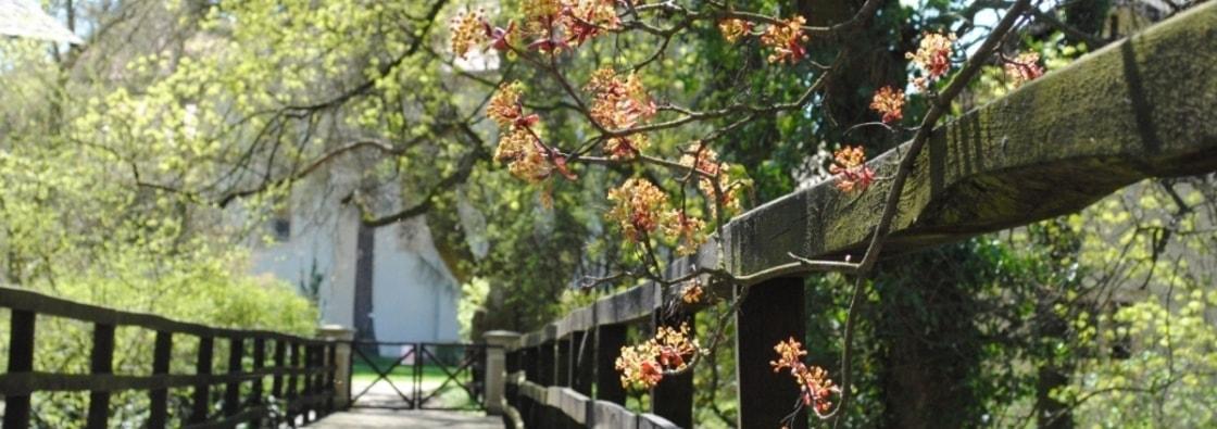 První máj - polibek pod rozkvětlým stromem
